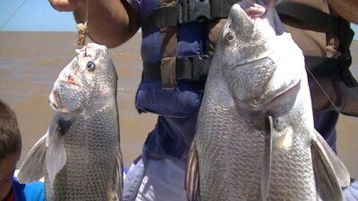 Dieron a conocer el protocolo para la temporada de pesca de la Corvina negra