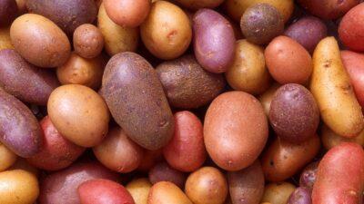 Científica marplatense desarrolla un suplemento dietario a base de papa andina para prevenir el Alzehimer
