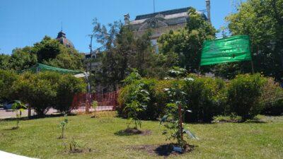 Plantaron marihuana en Plaza San Martín, frente a Gobernación, y se van a quedar a cuidarlas hasta que florezcan en abril