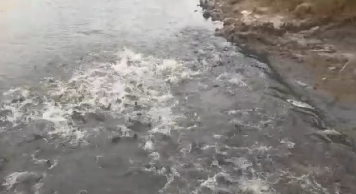 Preocupa la posible mortandad de peces ante la gran sequía en la provincia de Buenos Aires – Video