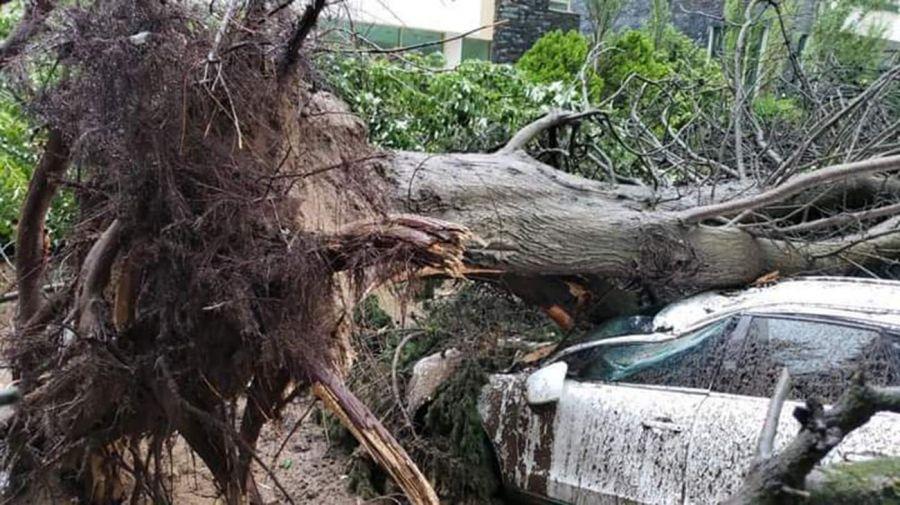 La cola de un tornado voló techos, volteó arboles y generó destrozos en Pinamar