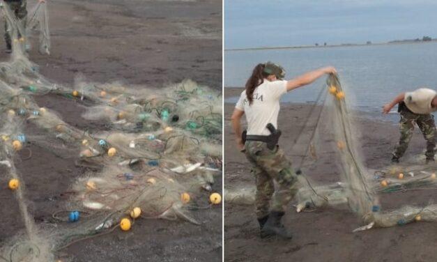 Secuestraron 500 metros de redes con 150 kilos de pejerrey en Trenque Lauquen