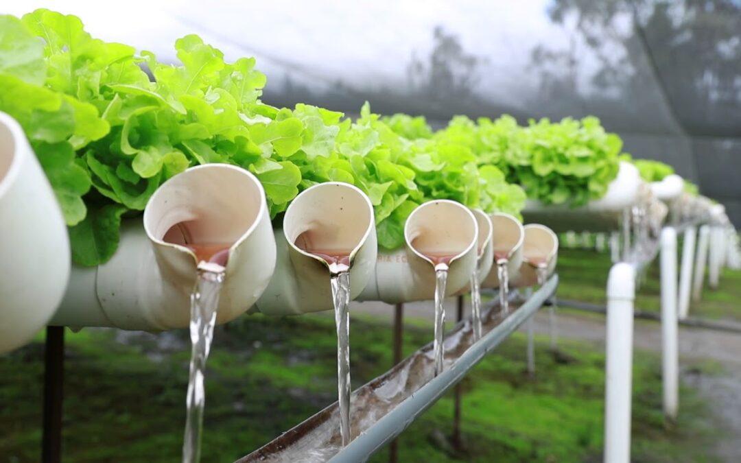 Expertos del INTA darán un curso online y gratuito sobre cultivos hidropónicos para principiantes