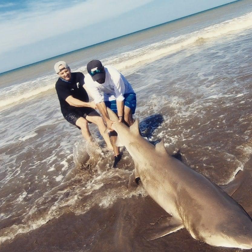 Pescaron un tiburón de costa en Arenas Verdes