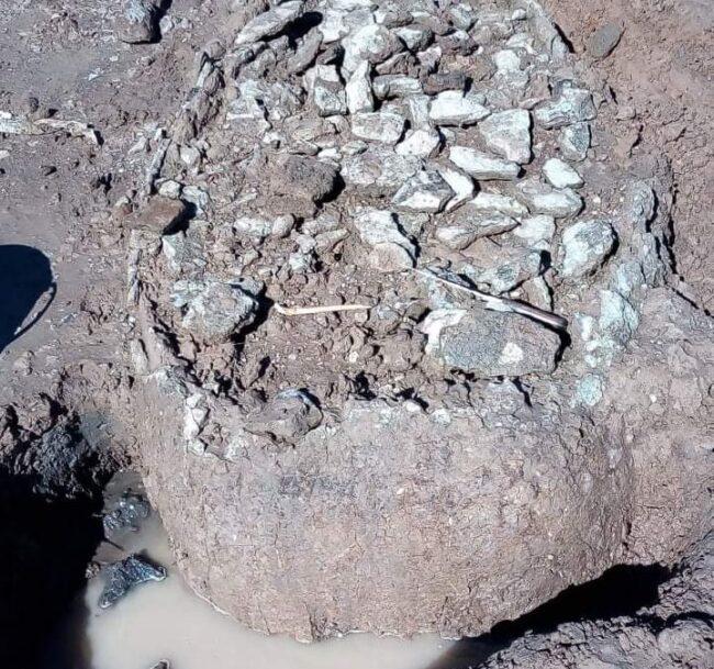 Investigadores llegan a Trenque Lauquen para analizar restos de gliptodontes hallados por pescadores