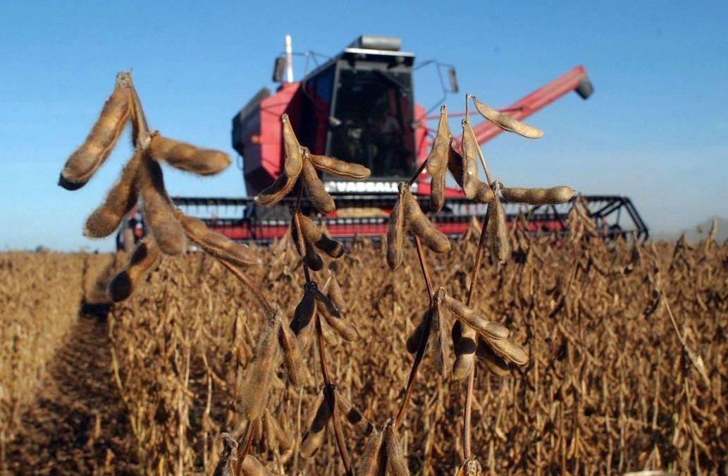 Investigadores de la UNLP descubren como reutilizar los residuos de la soja y transformarlos en productos de alto valor nutricional