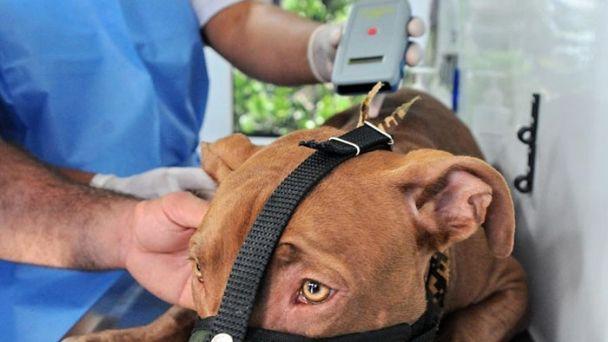 """La Municipalidad de La Plata obligará a registrar y """"chipear"""" a los perros de """"razas potencialmente peligrosas"""""""