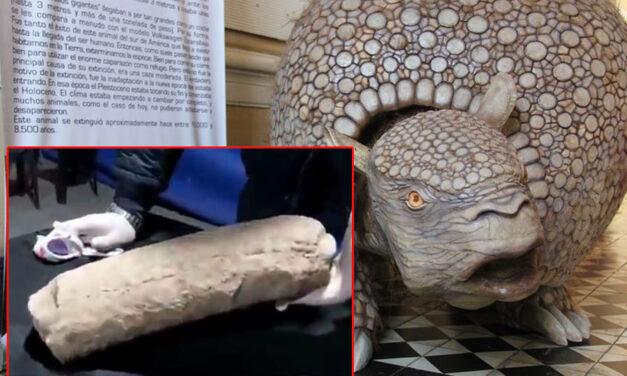 Tremendo: descubrieron restos fósiles de una especie milenaria en Pehuajó