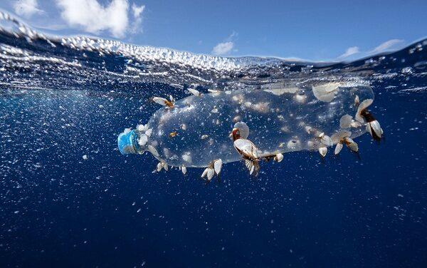 """Día Mundial de los océanos: """"La vida en este planeta no es posible sin océanos sanos"""""""