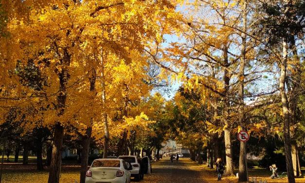 Se viene el Día Mundial del Árbol y tres municipios te acercan árboles míticos con identidad bonaerense