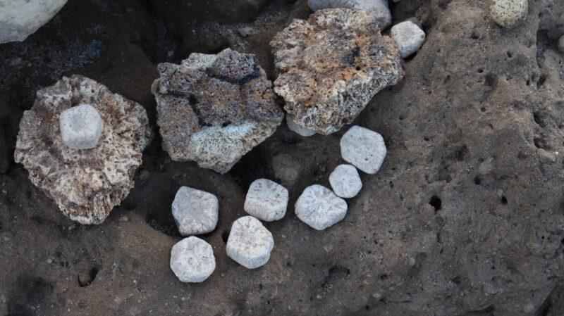 Hallaron los restos de un gliptodonte en Mar Chiquita