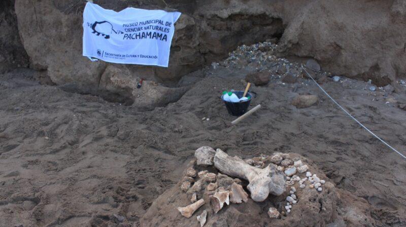 Encontraron los restos de un gliptodonte en Mar Chiquita