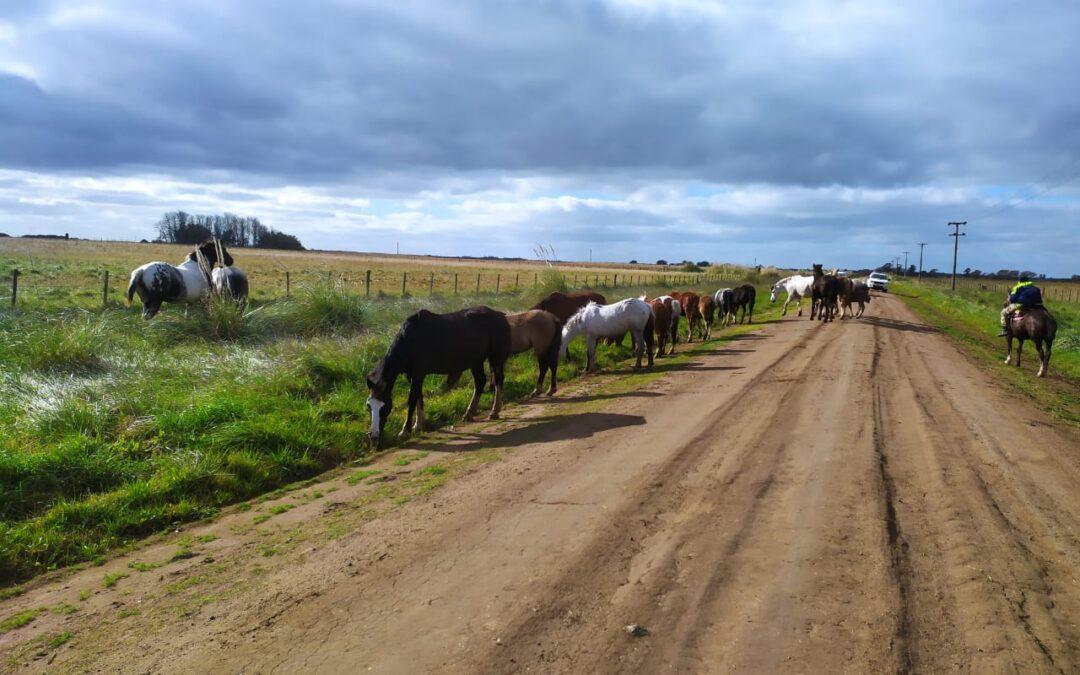 Insólito: había 17 caballos sueltos en un camino, nadie los reclamó y se los llevaron a un depósito judicial