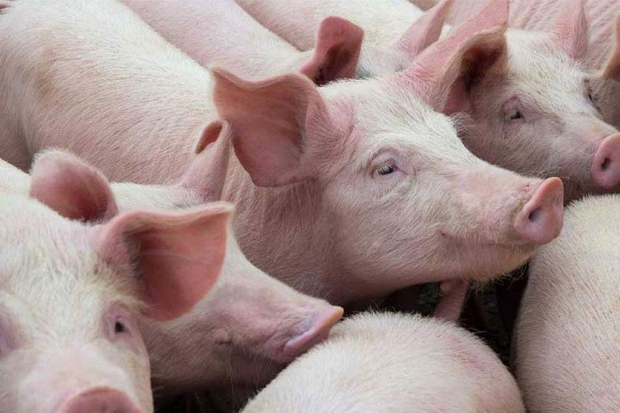 Carlos Tejedor: anuncian la construcción del primer frigorífico porcino