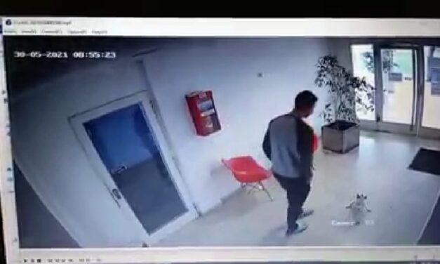 Fue filmado pateando brutalmente a un caniche toy: lo escracharon, la novia lo dejó y fue despedido del trabajo
