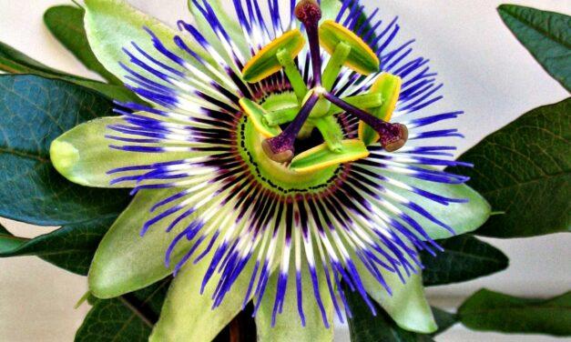 """""""Botiquín del Huertero"""": el INTA compartió una guía sobre el uso de plantas aromáticas y medicinales"""