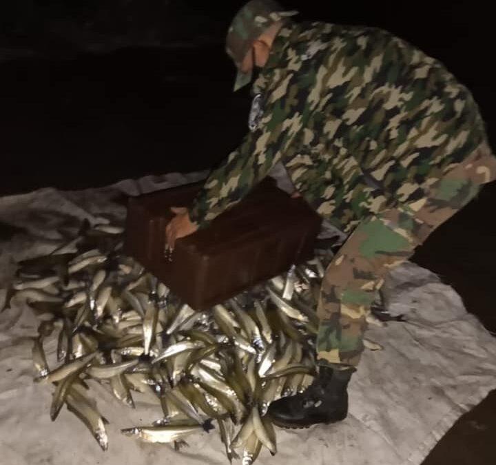 Los furtivos no respetan la cuarentena: en Trenque Lauquen hallaron redes con 200 kilos de pejerrey