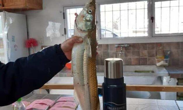 Un lapridense pescó un pejerrey de casi 2 kilos y batió un récord local