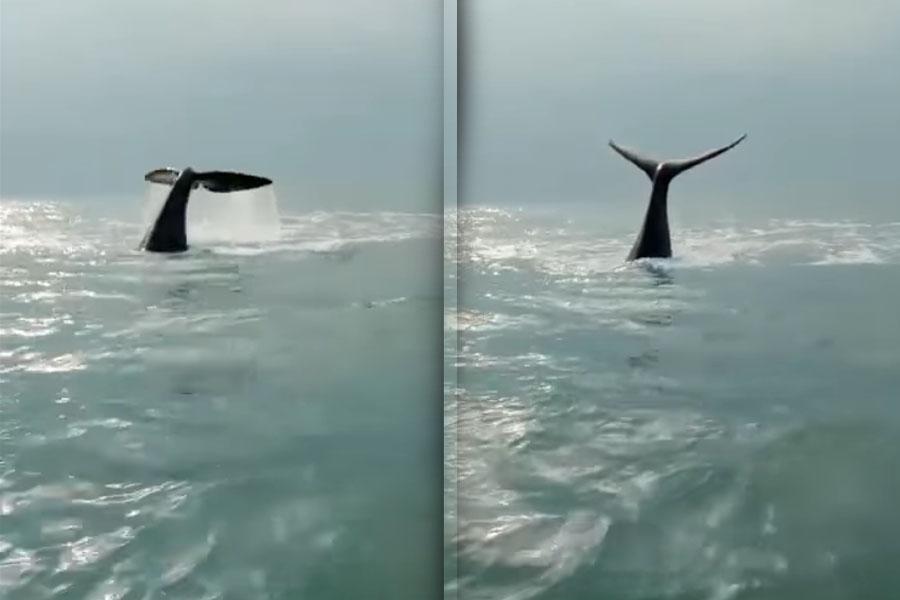 Imperdible vídeo: aparecieron ballenas en el Partido de La Costa y pescadores las filmaron