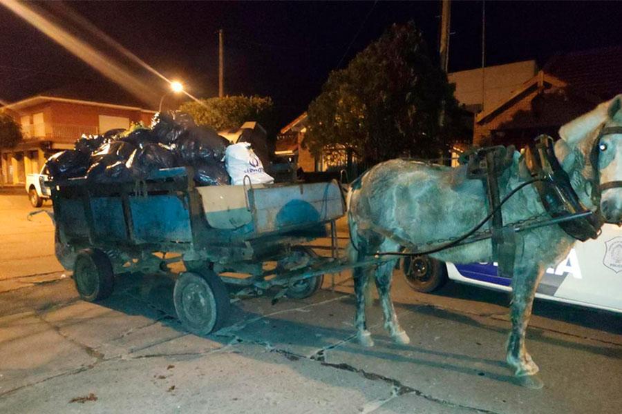 ¡Insólito! Cometían robos y acechaban a los vecinos de Mar del Plata con un carro tirado por un caballo