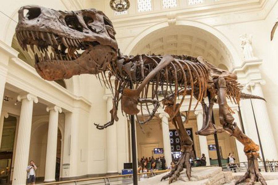 Vacaciones con los Dinosaurios: el Museo de la UNLP brinda talleres virtuales y te mostramos como anotarte