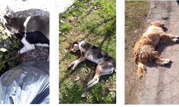 Masacre animal en La Plata: Mueren perros y aves envenenadas