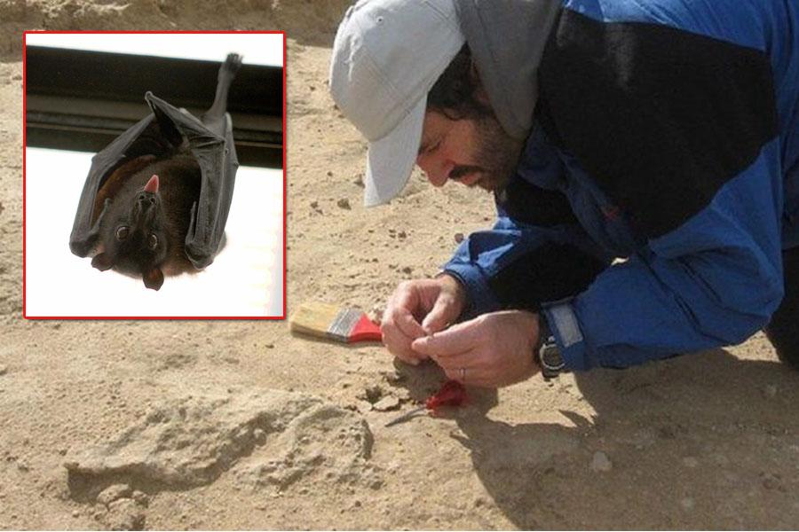 ¡Increíble! Hallan el fósil de un vampiro gigante de 100 mil años en Miramar