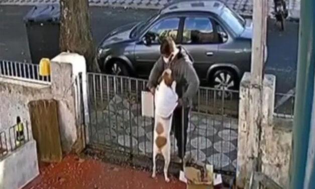 De no creer: le robaron el abrigo a un perrito en Lanús y quedó filmado