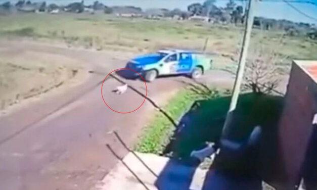 Imágenes sensibles: Policías persiguieron, aplastaron y mataron a un perrito en Zárate