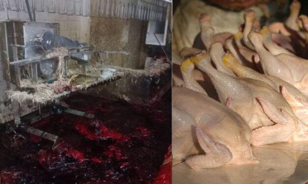 Un ex empleado de una planta avícola denunció que lavan con cloro pollos podridos para venderlos: la respuesta de la empresa