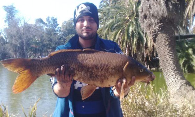 """El Lago del Bosque de La Plata sigue sorprendiendo: ahora pescaron una """"bestial"""" carpa de 6 kilos y medio"""