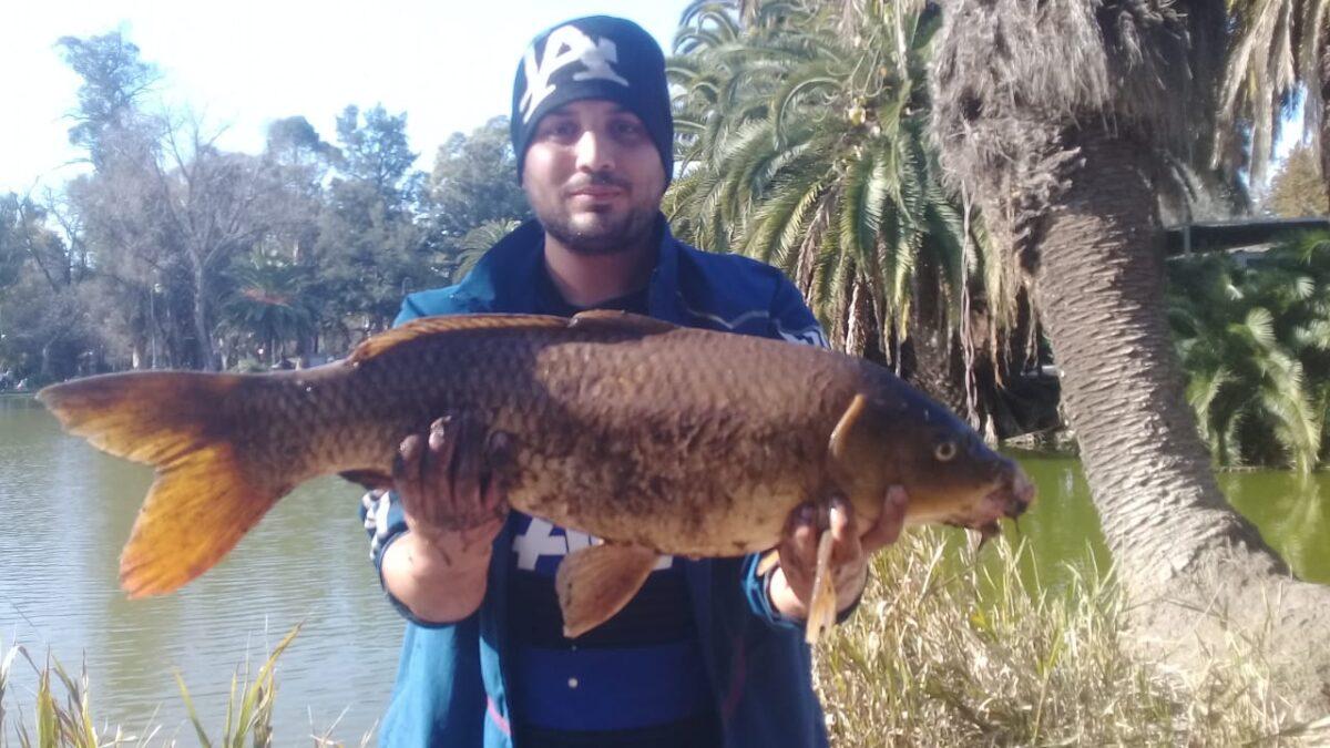 Pescaron una carpa gigante en el Lago del Bosque