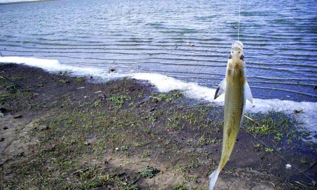 ¿Todavía no fuiste a pescar? Se viene septiembre y comienza la veda del pejerrey
