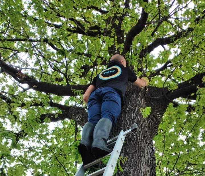 Insólito: trepó a un árbol para bajar a un gato y ambos terminaron siendo rescatados por los bomberos