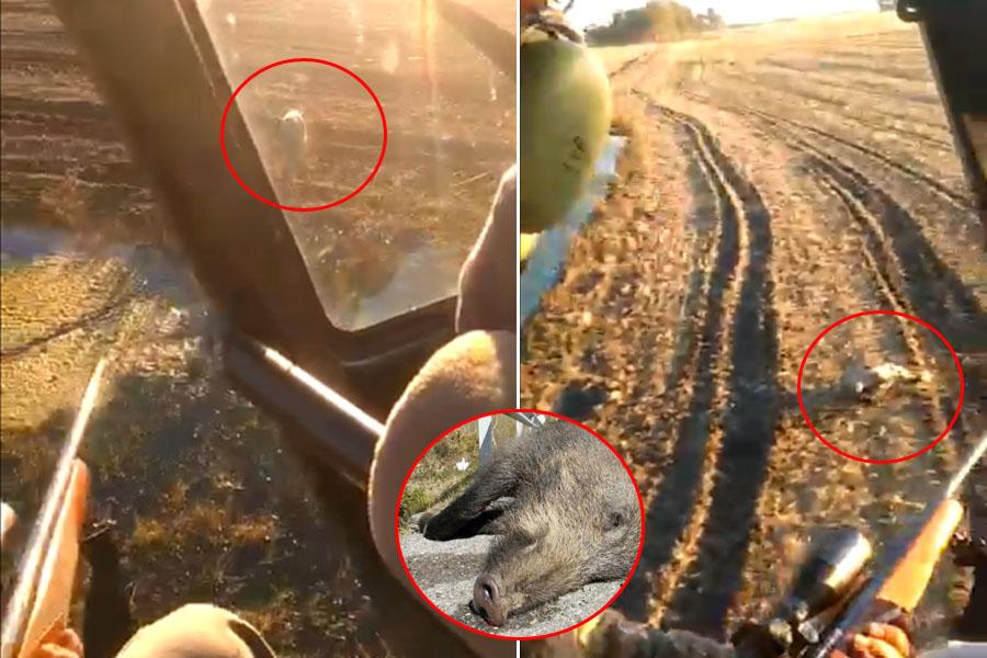 Escándalo en Henderson: cuatro ricachones se filmaron cazando jabalíes desde un helicóptero