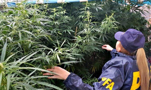 """Presos por cultivar marihuana se organizan para reclamar una amnistía: """"Dejen de usarnos para hacer estadísticas"""""""