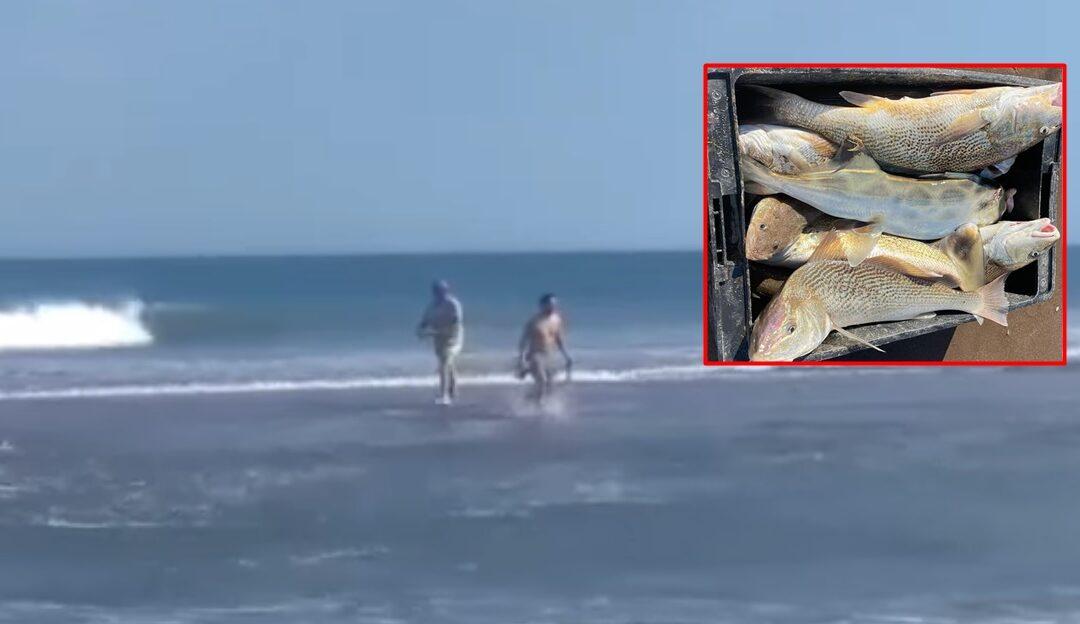 """Videos: en las playas de Tres Arroyos aparecieron tantas corvinas que las """"pescaban con las manos"""""""