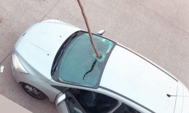 ¡Milagro en La Plata! Una rama atravesó violentamente el parabrisas por el temporal e hirió a un hombre