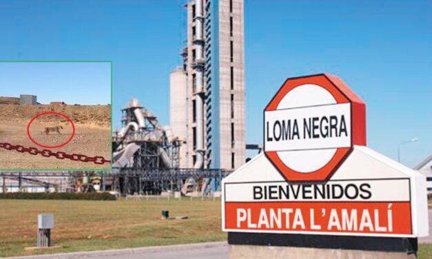 Video viral en Olavarría: filmaron a un puma en la fábrica de Loma Negra